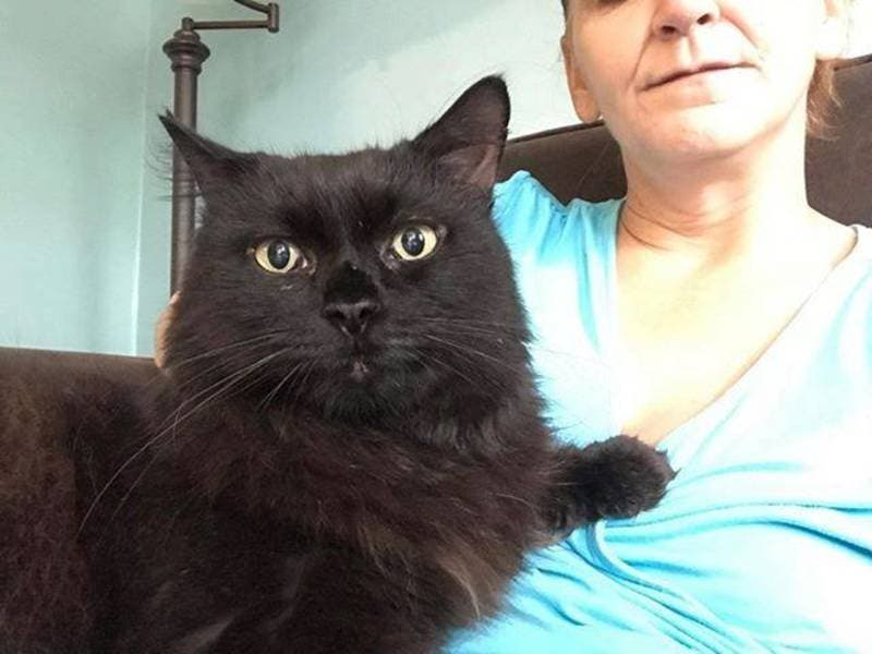 Cat Falls Out Window Goes Missing In Middletown Animal