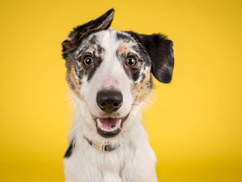CT's 1st Indoor Dog Park Opens In West Hartford | West