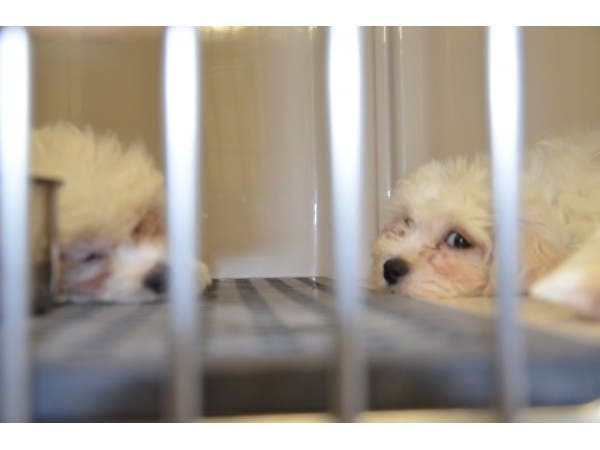 Bill To Force New Pet Stores To Sell Only Rescue Animals Passes N J