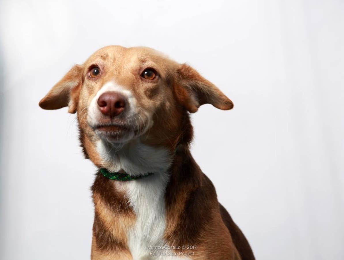 Monmouth SPCA Helps 70 Dogs Avoid Euthanasia | Wall, NJ Patch