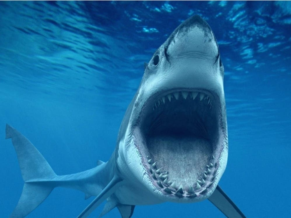 Shark Attack At Your NJ Beach: How Likely Is That To Happen?