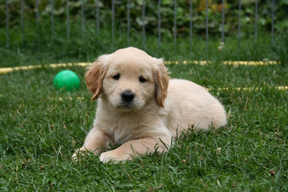 Puppies Sold At Petland Linked To Multi-State Bacterial