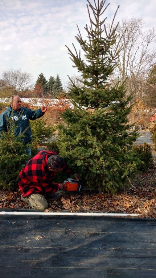 WATCH: Suffolk Police Donate Christmas Trees, Decorations to Families in Need-1 ...
