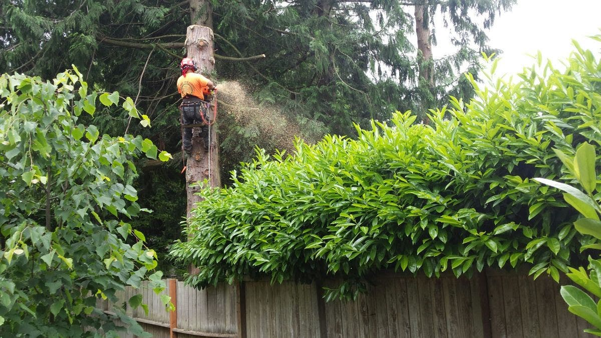 How Much Does It Really Cost To Trim Or Remove Trees And Shrubs