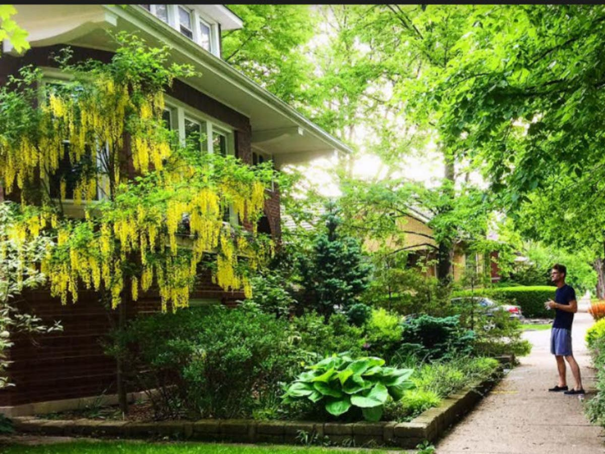 Best Chicago Bungalow Gardens Contest Begins Tuesday ...