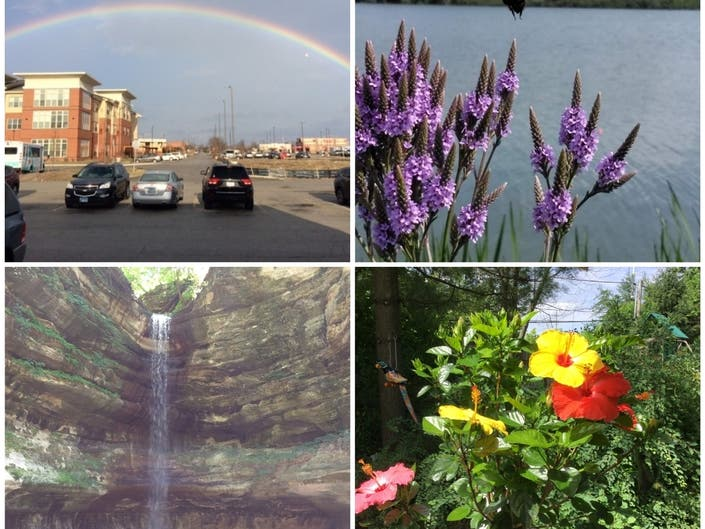 Rainbow Over Parking Lot, 3-Colored Hibiscus, Truffles: IL Photos