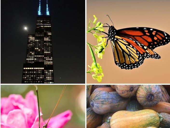 Full Moon Over Chicago, Walking Stick, Honeynut Squash: IL Photos