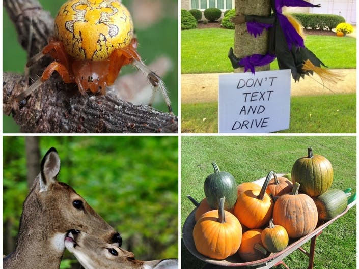 Pumpkin Spider, Squirrels Carving, Kazoo: IL In Photos
