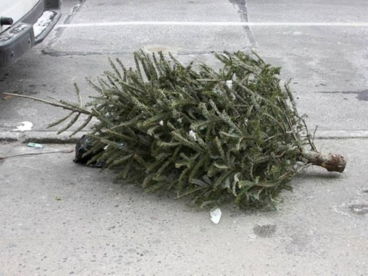 Recycle Your Christmas Tree In Gwinnett