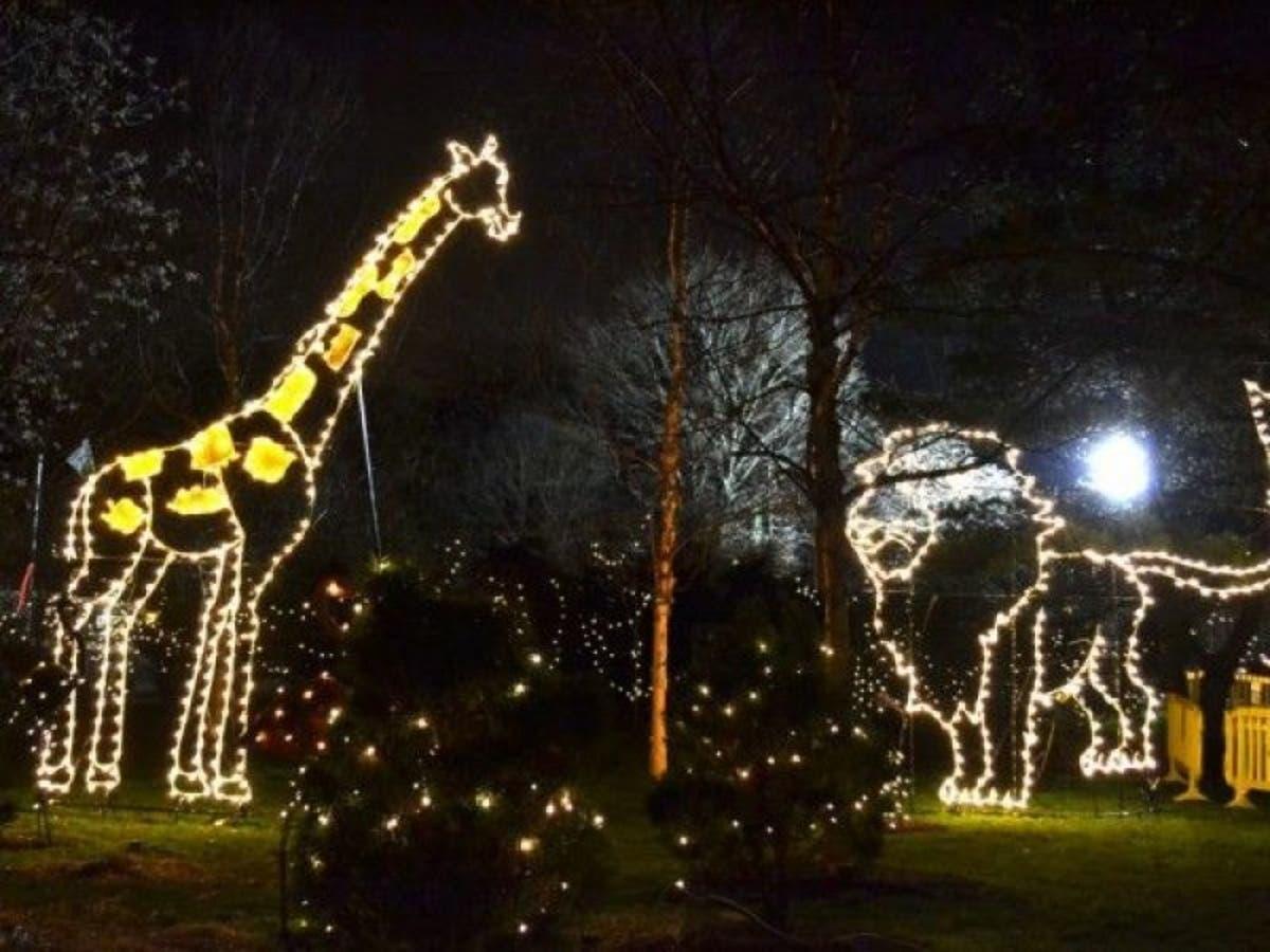 Turtle Back Zoo Christmas Lights 2019.Free Holiday Lights At Turtle Back Zoo Return For 2017