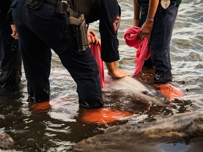 Distressed Dolphin Rescued From Rocky Shoreline In Jersey City