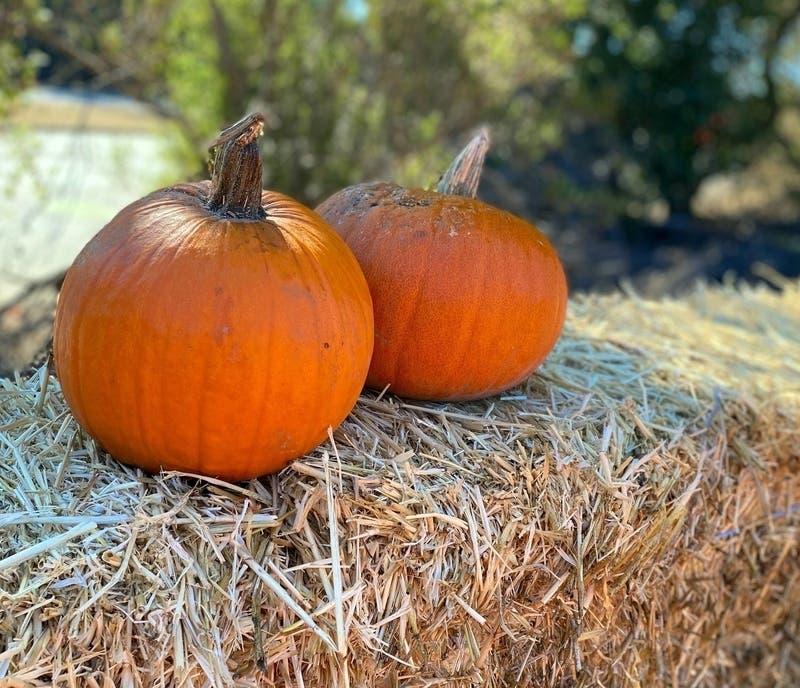 Nj Halloween Events 2020 Livingston Patch: Halloween Events, Fun Pumpkin Stuff (UPDATED