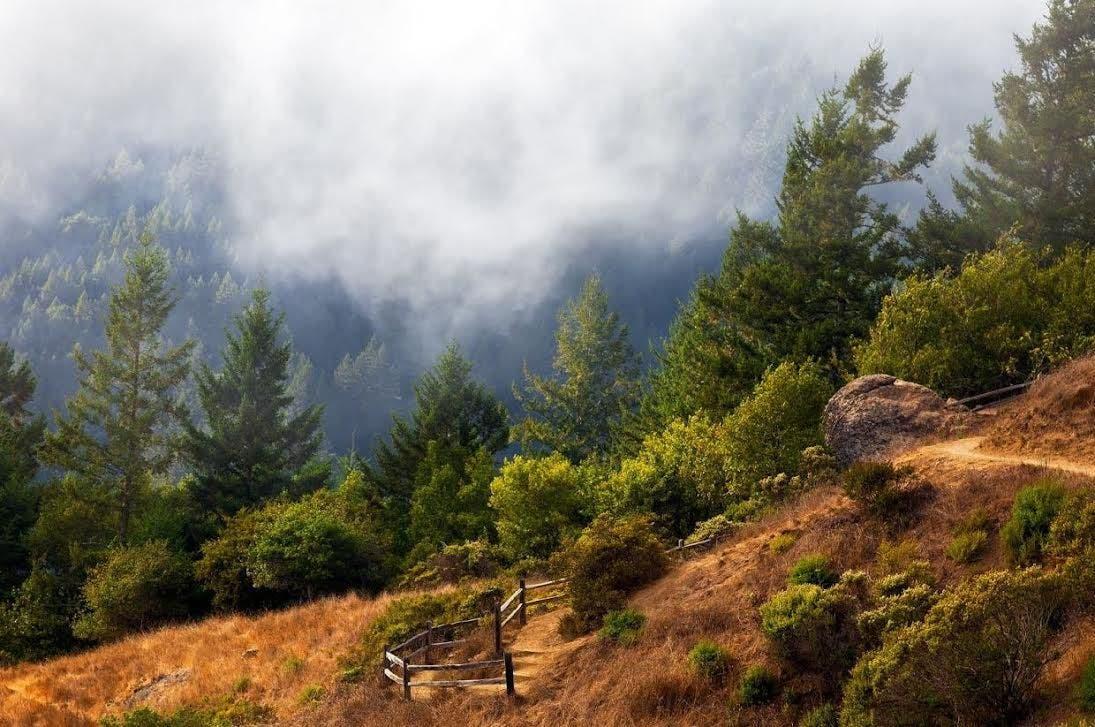 One Tam Science Summit Is Mt Tam In Peak Health