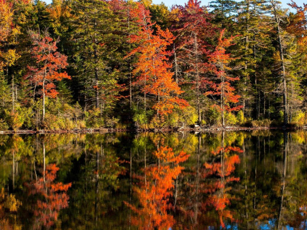 Foliage Map New York 2017.Fall Foliage Map 2018 When Autumn Leaves Peak In Pennsylvania