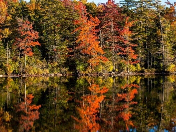 Fall Foliage Peak Map 2019: When Autumn Leaves Are Best In