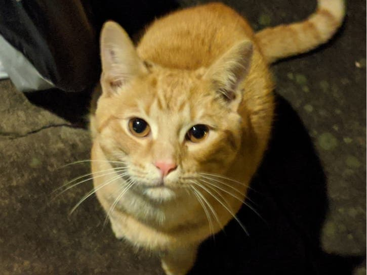 Lost Cat in Pennsylvania