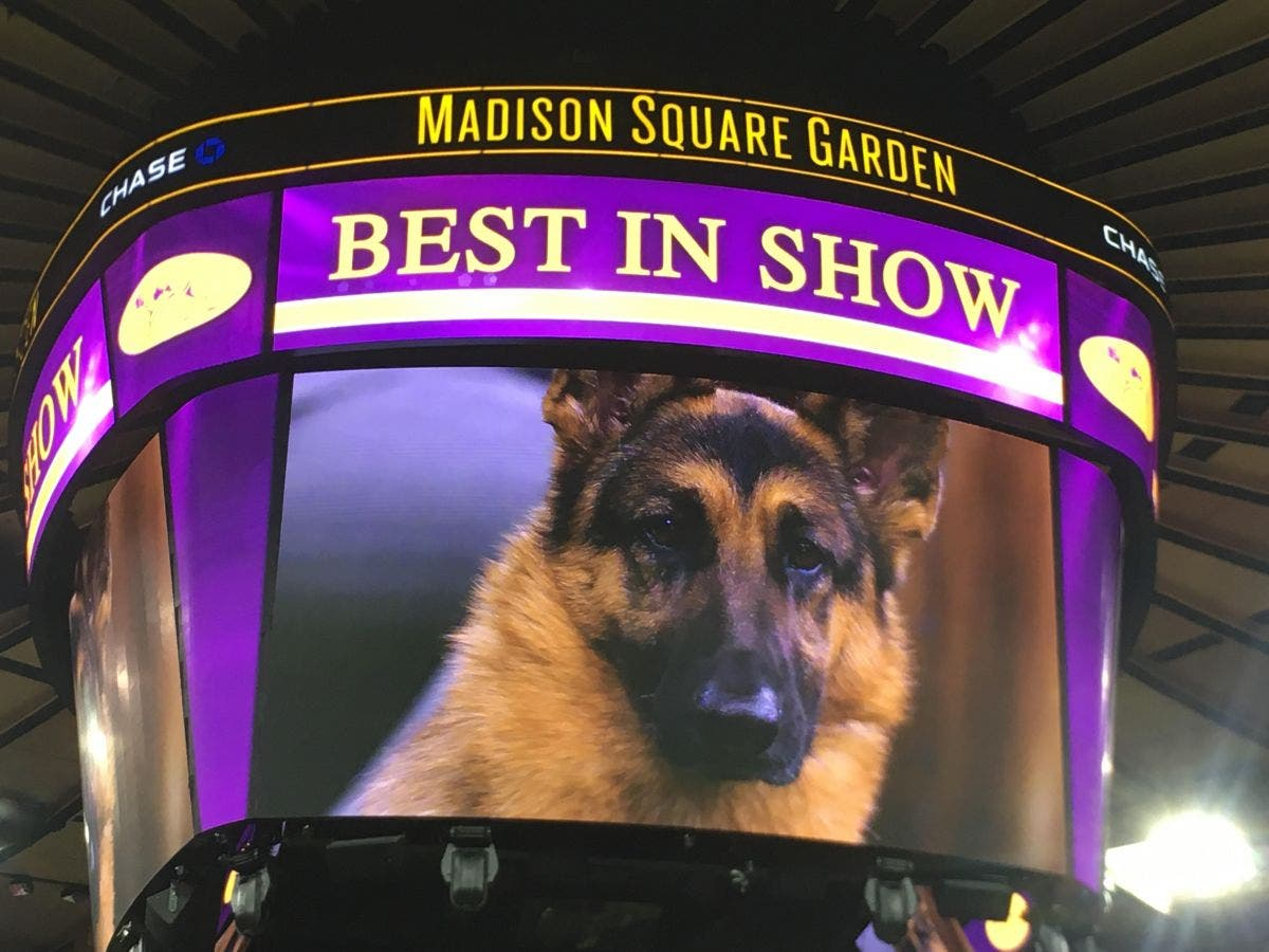 watch westminster dog show 2017 online free