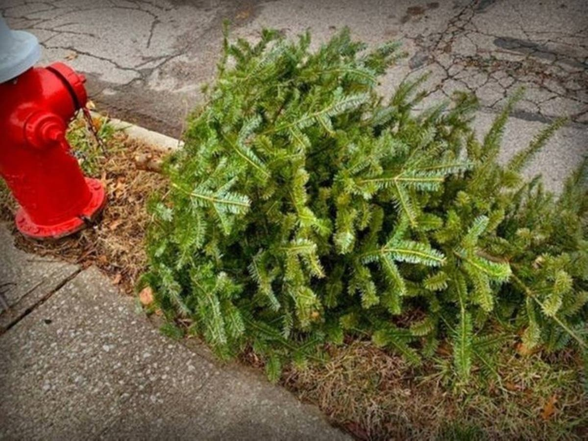 Highland Park Decatur Ga Christmas Lights 2020 Recycle Your Christmas Tree In Decatur Now Through Saturday