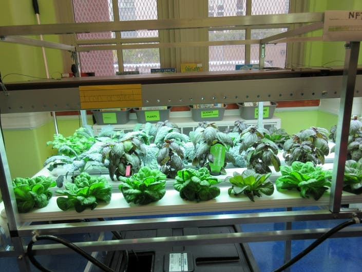 The new hydroponic lab at PS 183 will teach Upper East Side students about science, climate and sustainability.