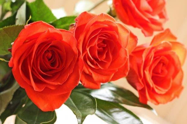 Fall Festival Deep Cut Gardens Rose Show In Middletown