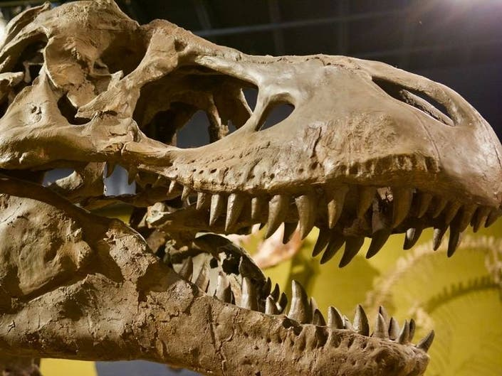 Marlboro Kids Dino Discovery Day April 28 And June 15