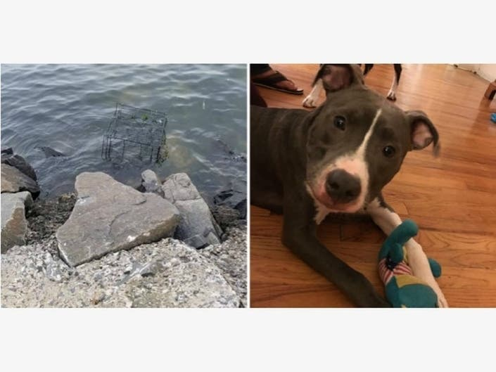 Man Guilty Of Trying To Drown Dog, But Tougher Laws Needed: Sen.