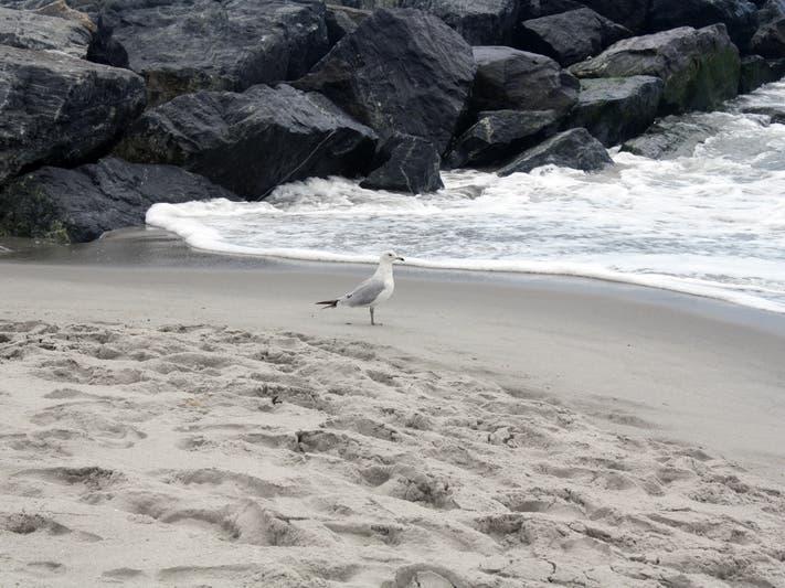 Long Branch Beach Replenishment Project Starts Oct. 1