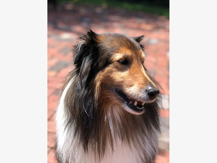 Daisy Is Scotch Plains-Fanwoods Pet Of The Week