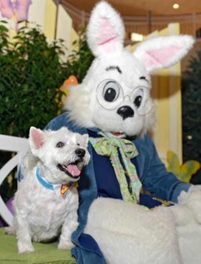 Easter Bunny Is Coming To Princeton Saturday Princeton Nj Patch