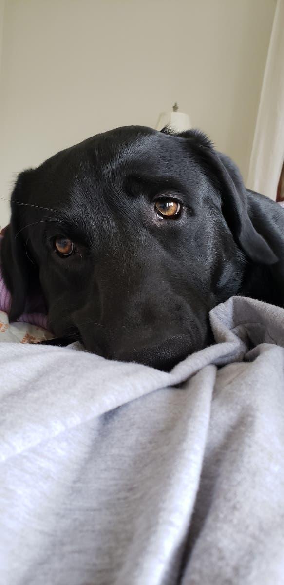 Doni Is Princeton's Pet Of The Week | Princeton, NJ Patch