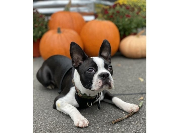 Rufus Is Princetons Pet Of The Week