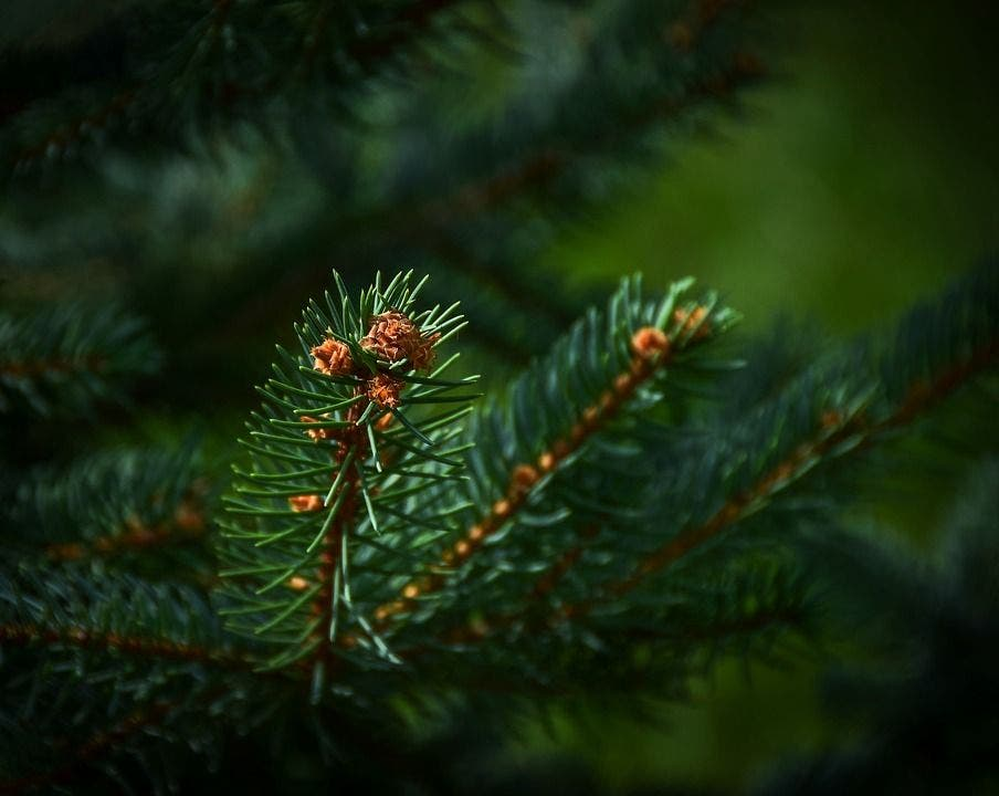 Where To Recycle Your Christmas Tree in Peachtree Corners