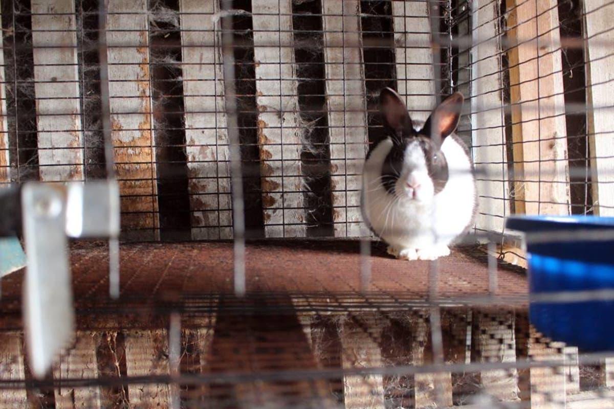 SPCA Rescues 30 Rabbits In Lower Makefield