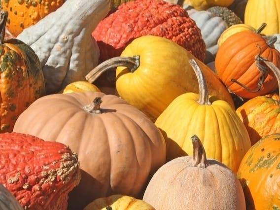Halloween 2020 Lowes Levittown Best Levittown Area Pumpkin Patches 2020 | Levittown, PA Patch