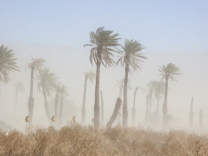 Saharan Dust Wreaks Havoc On Central Texas Allergy