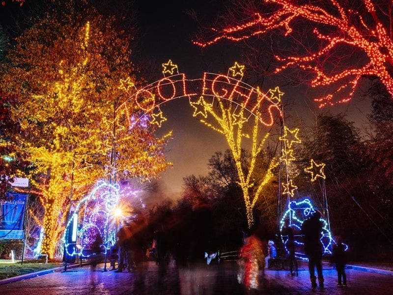 Christmas Time In Washington Dc.The National Zoo Is About To Light Up Big Time Washington