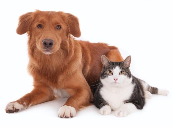 Heres Where DC, VA Towns Rank In Pet Friendliness