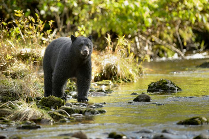 Black Bear Spotted In Waterford Backyard: Report ...