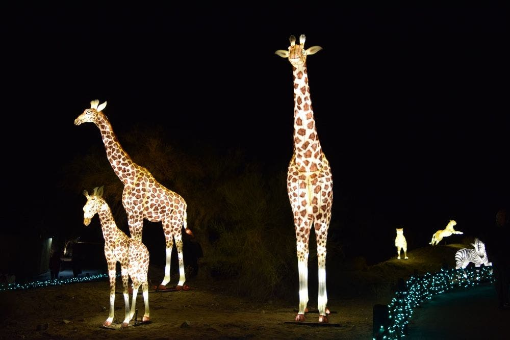 Wildlights The Living Desert Zoo And Gardens December 28