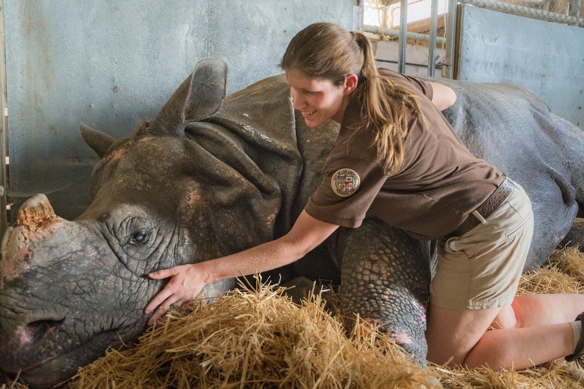 RIP, Randa, World's Oldest Zoo Rhino   Echo Park, CA Patch