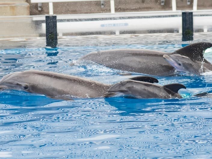 ​SeaWorld​ San Diego Welcomes 2 Dolphin Calves In 10-Hour Span