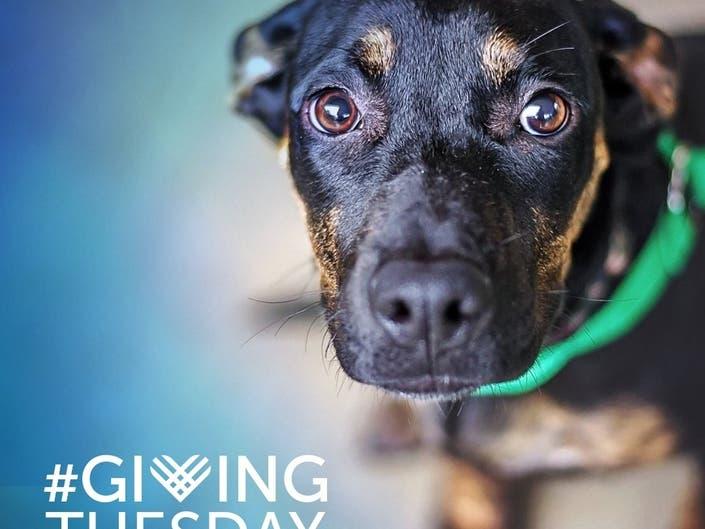 San Diego Humane Society Kicks Off Donation-Matching Campaign
