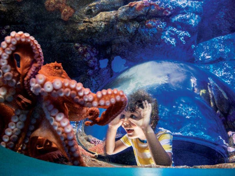 SeaWorld Kicks Off 55th Anniversary Celebration