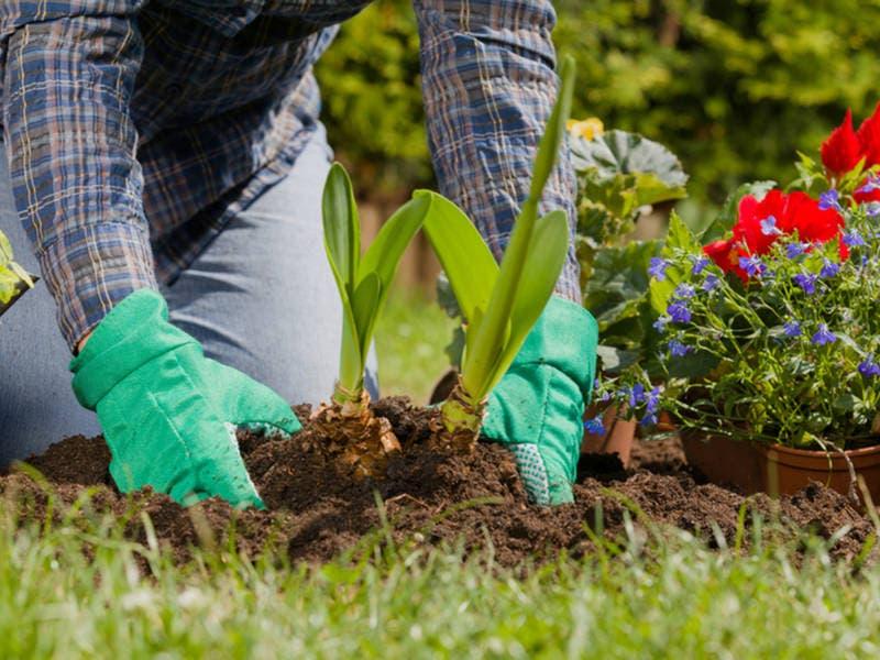 Gardeners Delight: Free Plant Swap