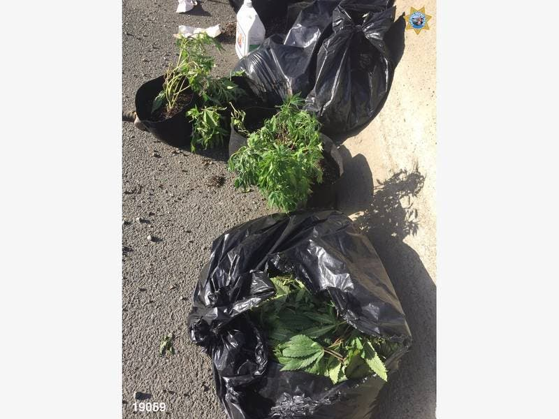 Bagged Marijuana Spills Onto Freeway