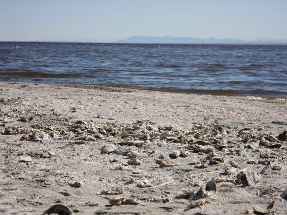 Smelling Rotten Eggs? Blame The Salton Sea