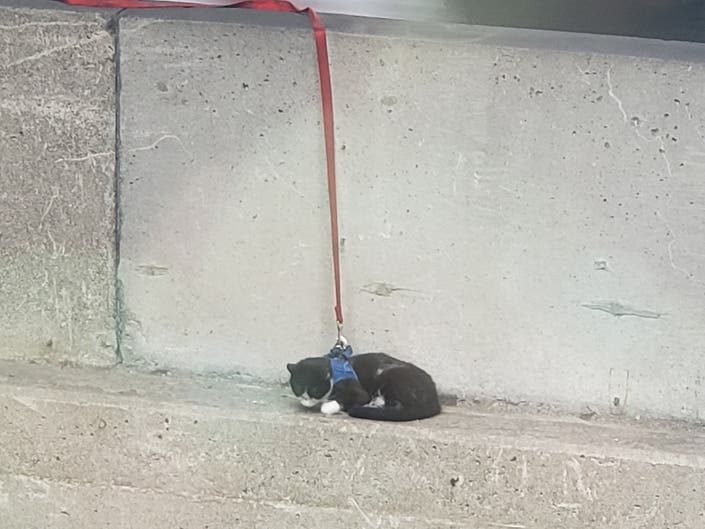 Leashed Cat Rescued From Bay Bridge