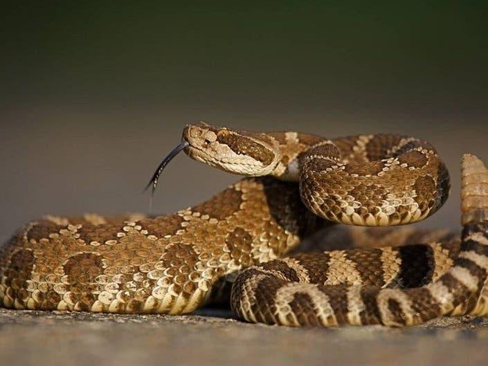 Hiker Suffers Possible Rattlesnake Bite On Trail Near Lake Hemet