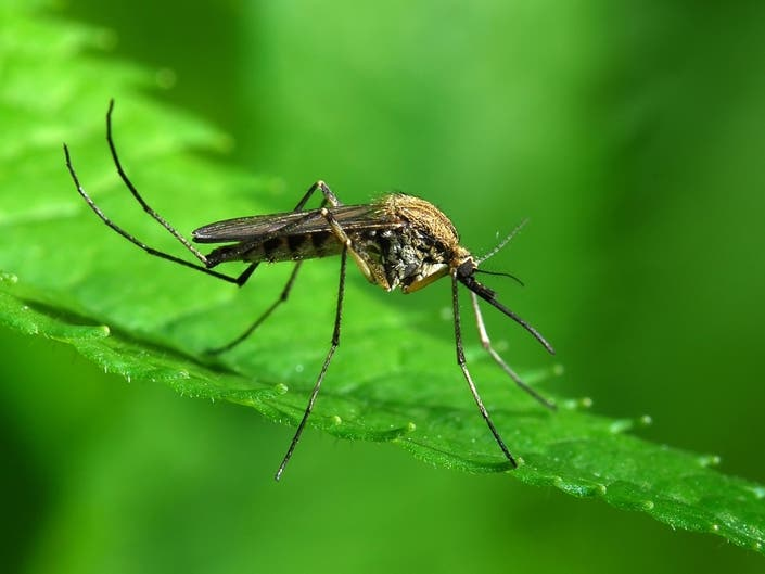 29 More Valley Mosquitoes Test Positive For West Nile