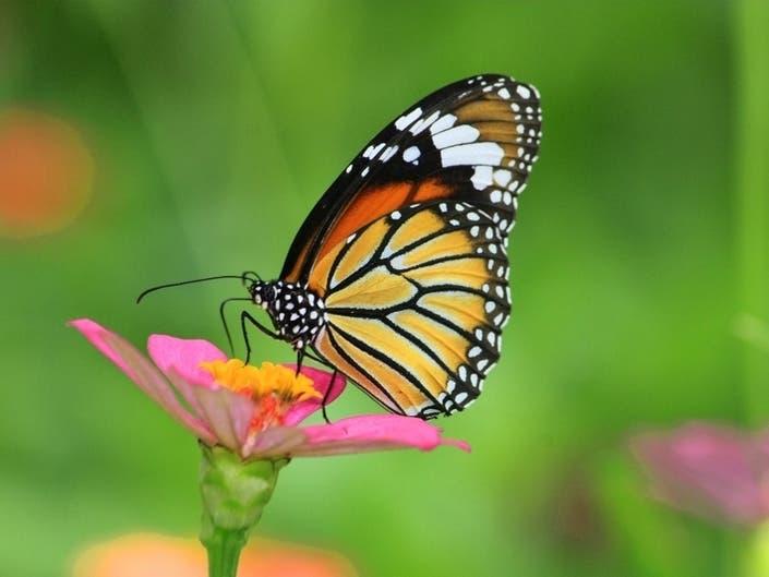 Living Desert To Spotlight Butterflies, Hummingbirds At Aviary